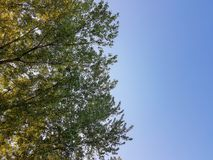 Spring landscape trees cloudy sky path grass green and blue color. Nature Royalty Free Stock Photos
