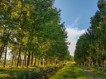 Spring landscape trees cloudy sky path grass green and blue color. Nature Royalty Free Stock Photography