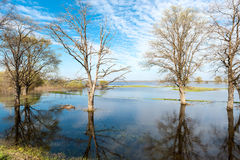 Spring landscape trees are flooded Royalty Free Stock Photo
