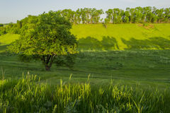 Spring landscape with trees and lots of plants. Royalty Free Stock Image