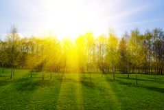Spring landscape with trees at sunset Royalty Free Stock Photo