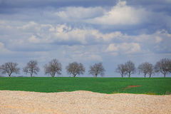 Spring landscape with the trees. Spring landscape with thetrees on the way and with rye field and green grass Stock Images