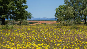 Spring landscape with trees, yellow flowers and Mountains Royalty Free Stock Photography