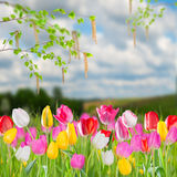 Spring landscape with tulip Royalty Free Stock Photo