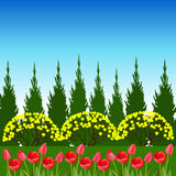 Spring landscape with tulip flowers. Royalty Free Stock Photos