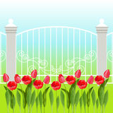 Spring landscape with tulip flowers. Stock Photos