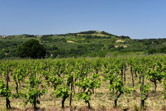 Spring landscape. Tuscany, Italy Royalty Free Stock Photo