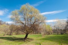 Spring landscape in Ukraine Stock Photo