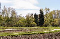 Spring landscape. Urban arboretum in young may greenery. Royalty Free Stock Image