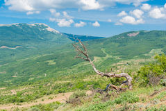 Spring landscape in Valley of Ghosts in Crimea Stock Images