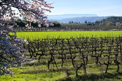 Spring landscape. royalty free stock photography