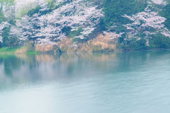 Spring Landscape of White Cherry Blossoms around Pond waters in Japan Stock Photo