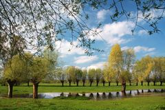 Spring landscape with willows. Spring - meadow with remnants of standing water with willows and a lovely sky with white clouds stock images
