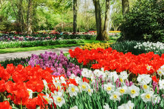 Spring Landscape With Colorful Flowers Stock Photos