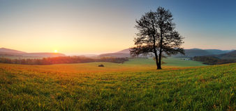 Spring Landscape With Tree And Sun Stock Photography
