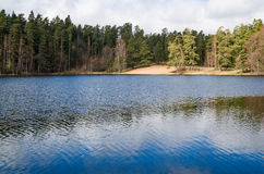 Spring landscape at wood lake Stock Photography