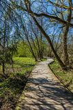 Spring landscape, wooden footpath through nature. Shadows, trees, sunny day, blue sky, fresh grass and green vegetation, vertical image stock images
