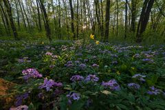 Spring landscape with woodlands royalty free stock photos