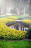 Spring landscape with yellow daffodils Royalty Free Stock Photo