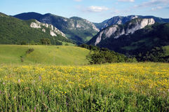 Spring landscape with yellow flowers Stock Photography