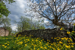 Spring landscape. With yellow flowers Royalty Free Stock Image