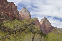 Spring Landscape Zion National Park Royalty Free Stock Photo