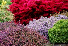 Spring Landscaped garden. Garden landscaped with colorful shrubs Royalty Free Stock Images