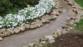Water flowing around spring flower bed  stock video