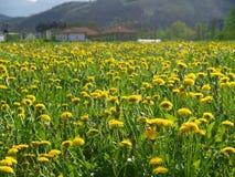 Spring landschap op Royalty-vrije Stock Fotografie