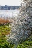 Spring landskap med blommas äppletrees royaltyfri fotografi