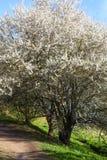 Spring landskap med blommas äppletrees arkivfoto