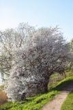 Spring landskap med blommas äppletrees arkivbild