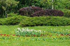 Spring landskap med blommor Tulpan Härlig bukett av tulpan Arkivbilder