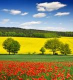 Spring landskap Royaltyfri Fotografi