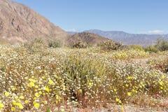 Spring Lanscape in the Desert stock images
