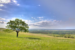 Spring lanscape with oak. Green meadow. Blue sky Stock Photo