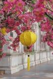 Spring lanterns Royalty Free Stock Photo