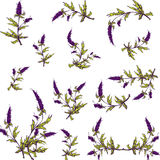 Spring lavender graphic set for your design Royalty Free Stock Images