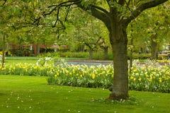 Spring lawn in garden Stock Photos
