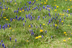 Spring Lawn Royalty Free Stock Image