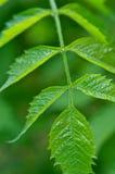 Spring leaf Stock Images