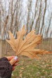 A spring leaf royalty free stock photography