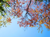 Spring leaf. Beautiful spring leaf and branch on blue sky background Stock Images