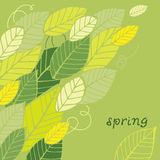 Spring leaf card Stock Photo