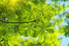 Spring leaf Royalty Free Stock Photos