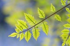 Spring leaf. Stock Image