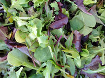 Spring leaf lettuce on display Stock Photos