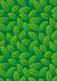 Spring leaf pattern Stock Photography