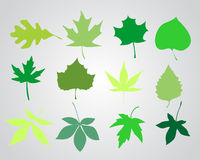 Spring leaves. Vector illustration background Stock Photos