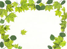Spring leaves. Royalty Free Stock Photography